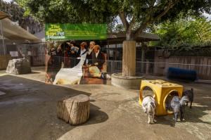 San Diego Zoo petting paddock, 2012